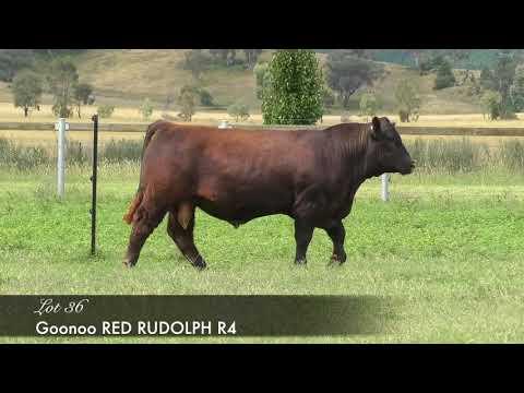GOONOO RED RUDOLPH (AI) (AMF) (MAF) (NHF) (OSF) GSJR4