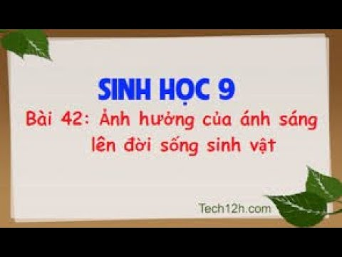 SINH 9 BÀI 42 ẢNH HƯỞNG CỦA ÁNH SÁNG LÊN ĐỜI SỐNG SINH VẬT