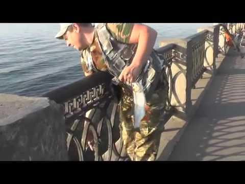 Как в мае самарские голавлятники ловят рыбу на набережной