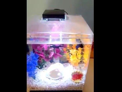 Tetra 1.5 Gallon Cube Aquarium Review + tips