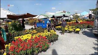 Chặt bỏ hoa trưa 30 Tết vì người mua trả giá 10 ngàn đồng chậu