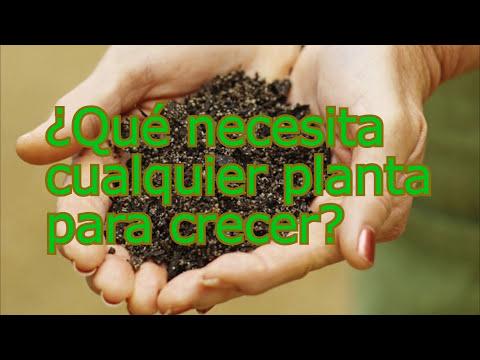 Nutrición y Crecimiento de todo Tipo de Planta: Hortalizas, Vegetales, Árboles Frutales, etc
