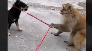 Funny and Cute Monkey Videos Compilation 2019 P12 - Monkey Videos