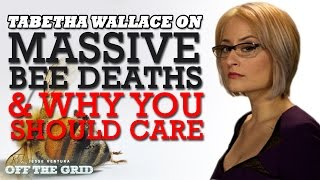 Tabetha Wallace on Massive Bee Deaths & Why You Should Care | Jesse Ventura Off The Grid - Ora TV
