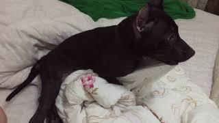 Пёс порно-актёр