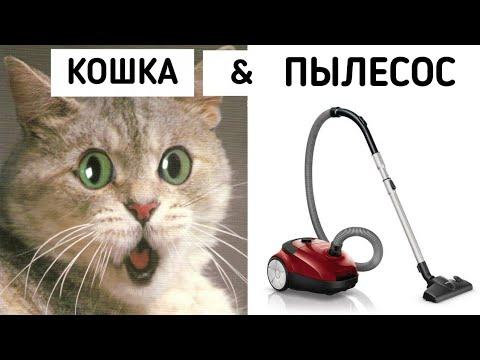 Кошка и пылесос! Смешные кошки!