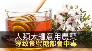 思浩提提你冬天飲蜜糖要小心!食蜜糖中毒都係因為人類太鍾意用農藥!(大家真風騷)