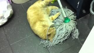 Кот и швабра!