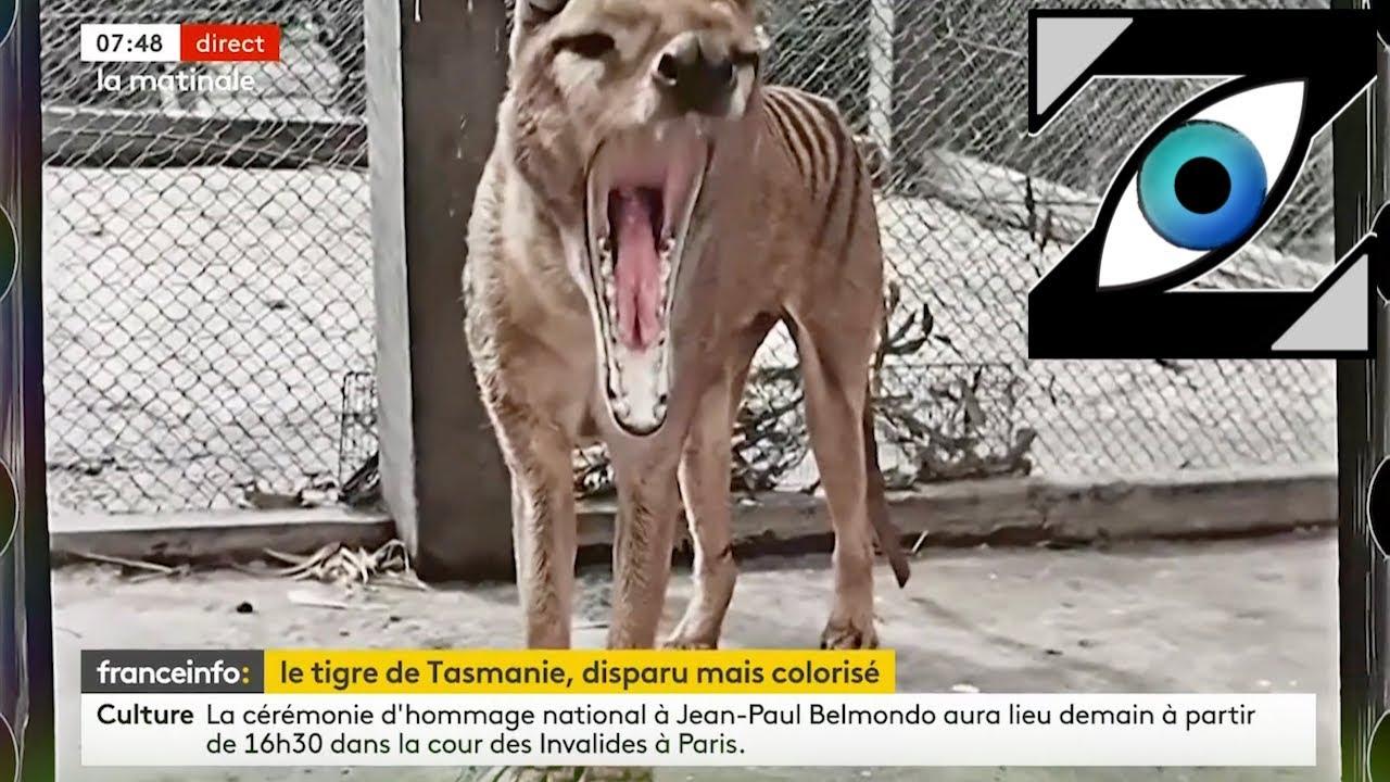 [Zap Actu] Le tigre de Tasmanie, Début d'un procès historique, La charia en Afghanistan (09/09/21)