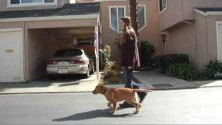 Leash Training S1E5