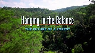 Hanging In The Balance: The Future Of A Forest