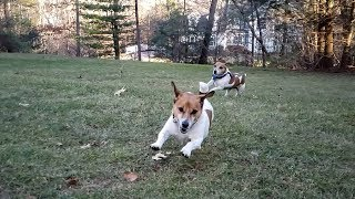 Samsung Galaxy Super Slow-Mo Mode With Jumpin Jack Russells
