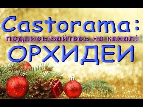 Castorama:ЧУДЕСНЫЙ завоз ОРХИДЕЙ!15.01.21,Касторама,Самара,Московское ш.
