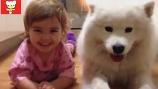 Дети и животные. Приколы с животными| Children and animals Dogs, Cats & Cute Babies Compilation