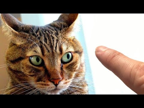 How To Pet A Cat (and not die)