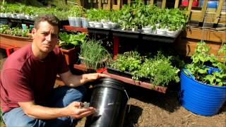 Setting Up a 5 Gallon Container for Gardening
