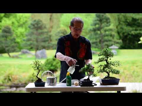 , title : 'Watering & Feeding Bonsai Trees
