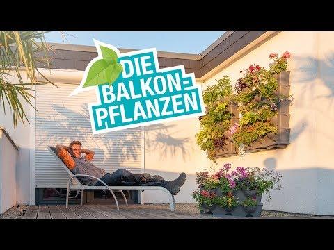 Die Balkonpflanzen: Tipps und Tricks zum Platz sparen, bewässern und richtig bepflanzen