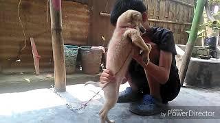 Manipuri Funny Video New FBC Episode 3