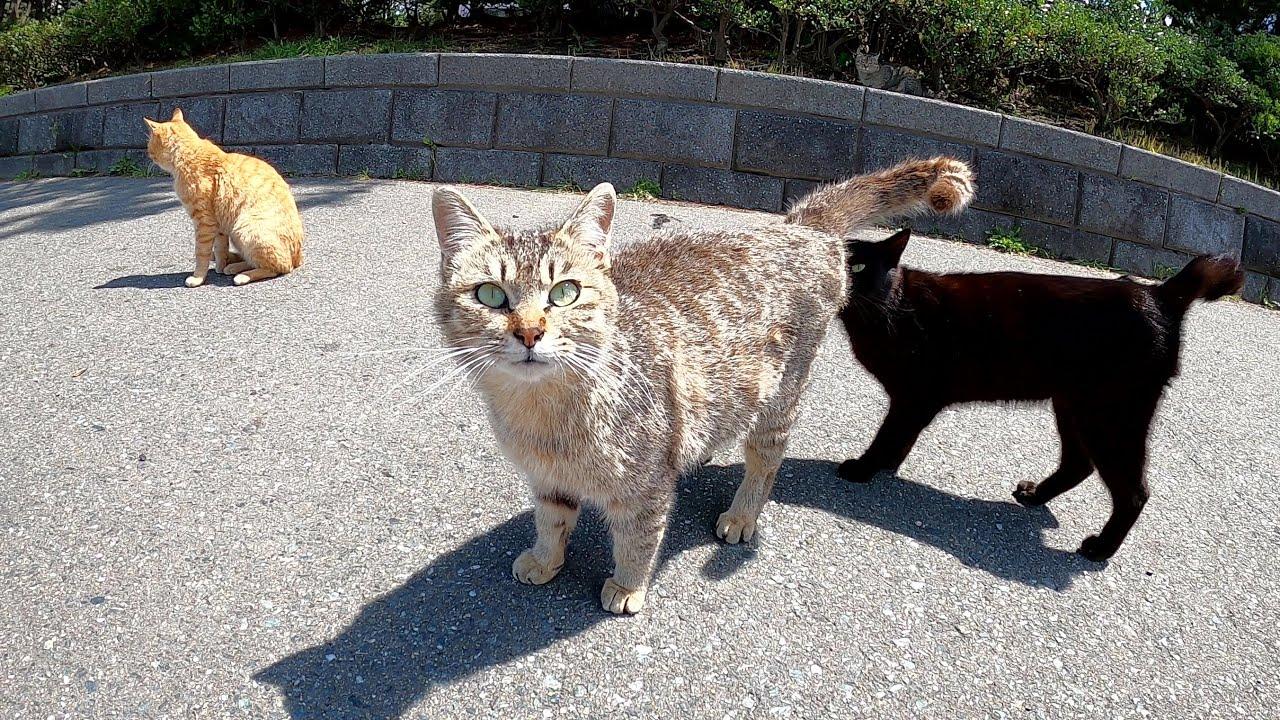 可愛らしい猫がゾロゾロ出てきて、気がつくと猫だらけになった