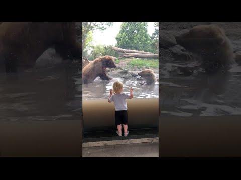 Bären erschrecken Jungen
