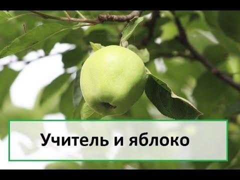 Учитель и яблоко