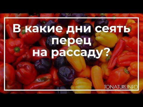 В какие дни сеять перец на рассаду? | toNature