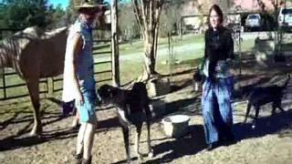 Bubba Earl's Hillbilly Hoedown