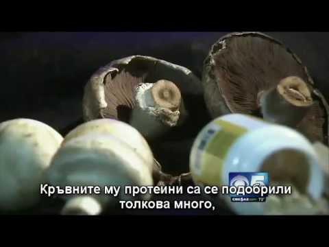 Пържени картофи в диабет тип 1