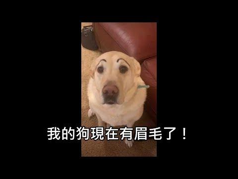 男子看電視時忽然聽到朋友在狂笑,轉頭發現他的狗有了眉毛
