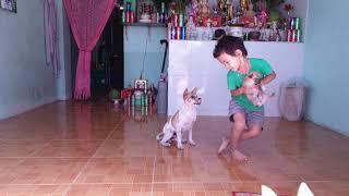 Chó và Thộn #2