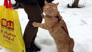 Кот впервые увидел снег