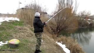 Как поймать сазана зимой в озере