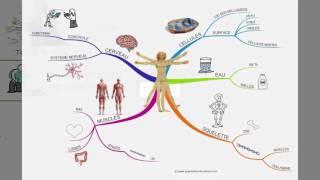 Vignette de Le Mind Mapping, définition selon Tony Buzan