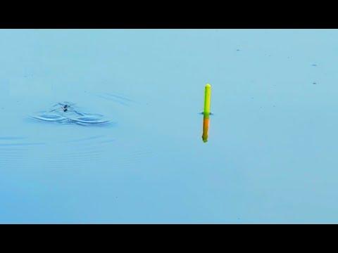 Карась на поплавок в ЖАРУ летом на поплавочную убийцу карася