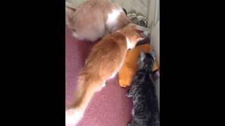 匂い袋に猫パンチ!