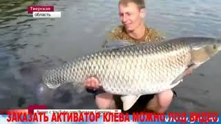 Отчеты о рыбалке рыбалка на фион братск