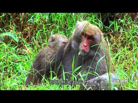 繽紛丹巒II-丹大野生動物重要棲息環境珍稀野生動物(臺語版)