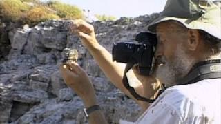 Galapagos Finch Evolution — HHMI BioInteractive Video