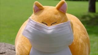 [과학상식] 과학할고양 - 마스크는 어떻게 먼지를 효과적으로 막아낼까?