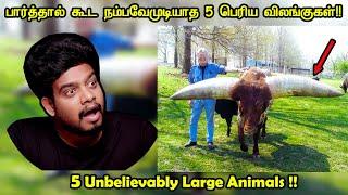 கண்களால் பார்த்தால் கூட நம்பவே முடியாத பெரிய விலங்குகள் | Unbelievably Large Animals | RishiPedia