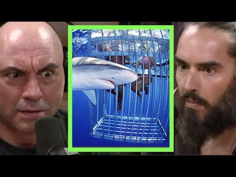 Russell Brand Swam with Sharks!! | Joe Rogan