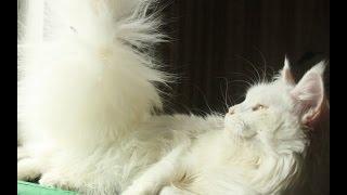 Смотреть онлайн Как ухаживать за кошками: опыт хозяйки четырех питомцев
