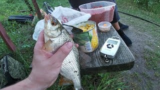 Вязовский пруд дегтярск рыбалка
