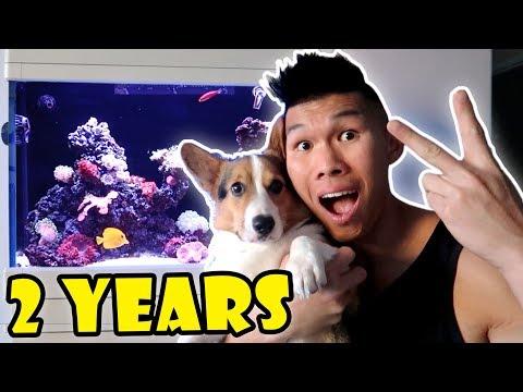 FISH TANK AFTER 2 YRS — Aquarium Setup || Life After College: Ep. 576