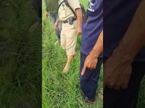 Video Pengendalian hama wereng batang coklat dan ulat grayak pada tanaman padi sawah di kelompok tani  .
