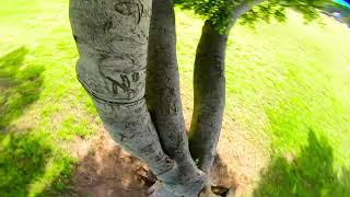 Playing with a tree???????????? | FPV Freestyle