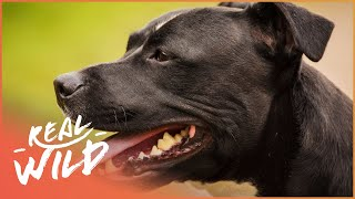 Dog's Day Out!   For The Love Of Dogs   Real Wild Documentary