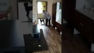 Ruský barevný boloňský psík