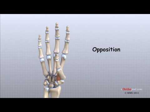 Inflamația diagnosticului articulației umărului